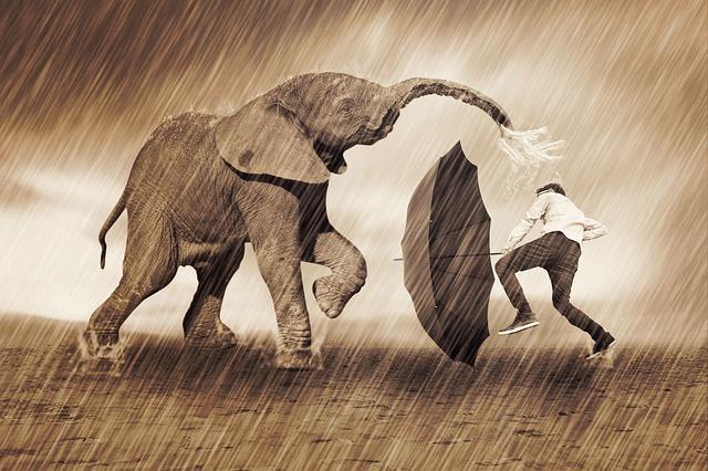kűzdés az elefánttal