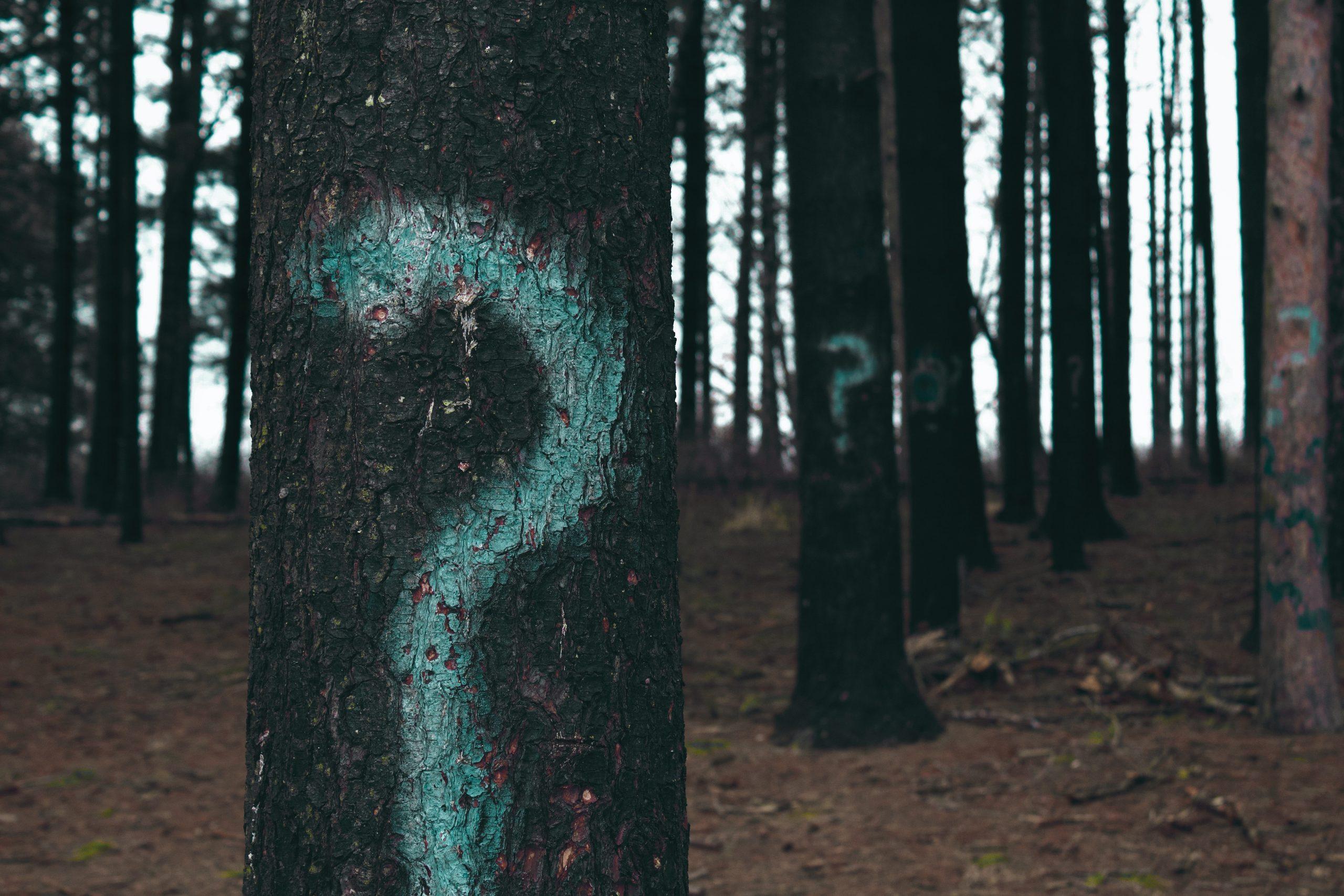 kérdőjel a fákon