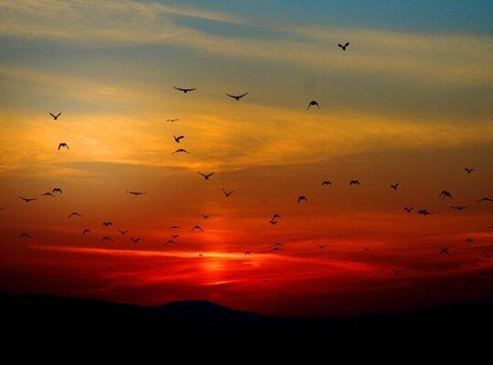 alkonyat madarak